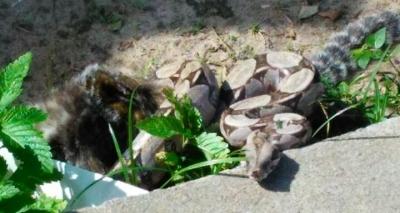 Cobra assusta moradores do Costa Azul e é devolvida à mata por PMs; veja vídeo