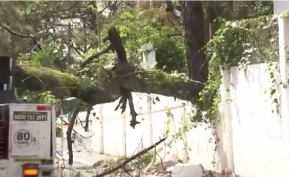 Árvore cai e deixa parte do bairro de Ondina sem energia elétrica