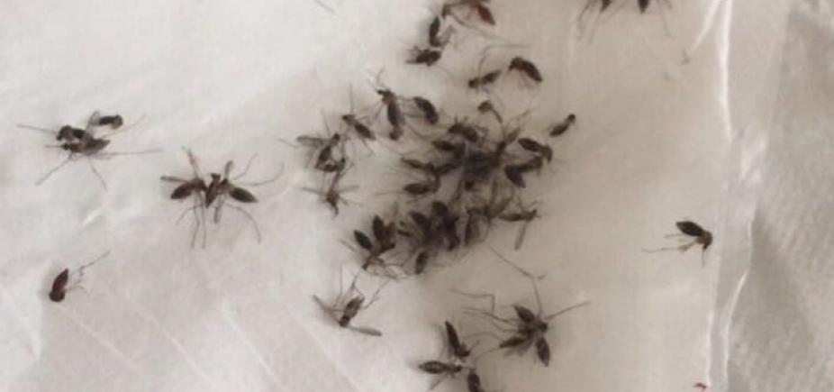 [Após infestação de mosquitos, Prefeitura de Alagoinhas diz que age apenas contra Aedes Aegypti]
