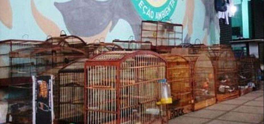[Aves silvestres são apreendidas em operação policial na região da Sete Portas]