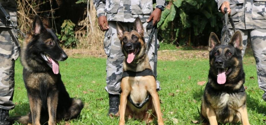 [Batalhão de Choque da PM conta com 3 cães treinados para identificar drogas e explosivos; companhia tem outros 36 animais]