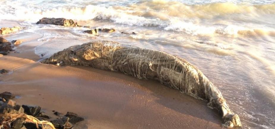 [Baleia jubarte é encontrada morta na ilha de Itaparica; este é o 30º caso na Bahia em 2017]