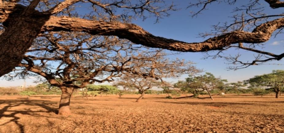 [Por causa da seca, Bahia tem mais de 170 municípios em estado de emergência ]