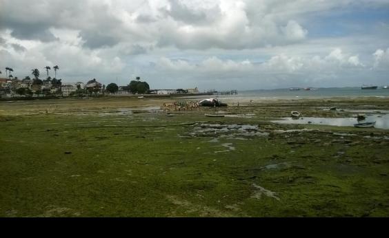 Limpurb inicia remoção de carcaça de baleia encalhada na Pedra Furada
