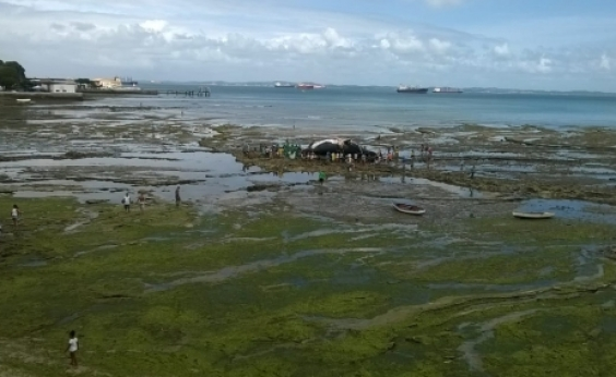 Carcaça de baleia que encalhou na região da praia da Boa Viagem é totalmente removida