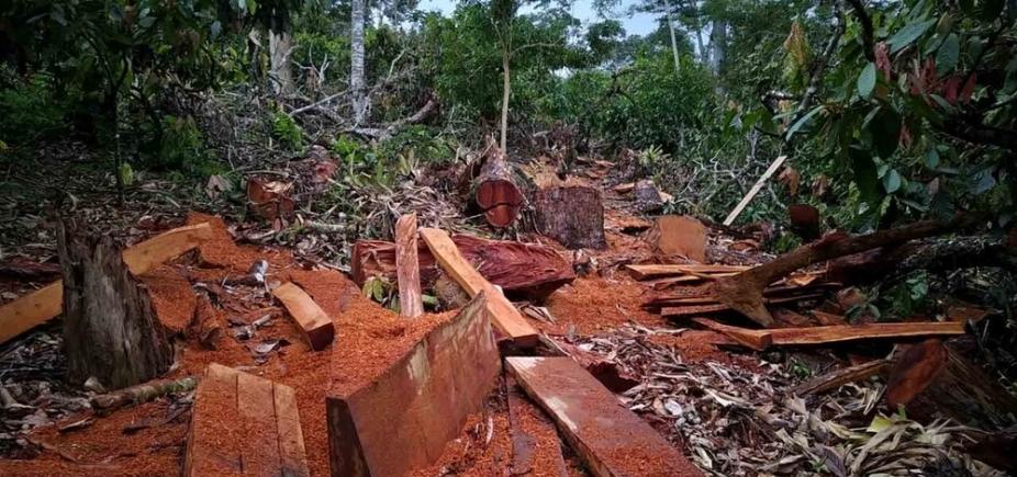 [Operação da PRF e Inema apreende madeiras extraídas ilegalmente]