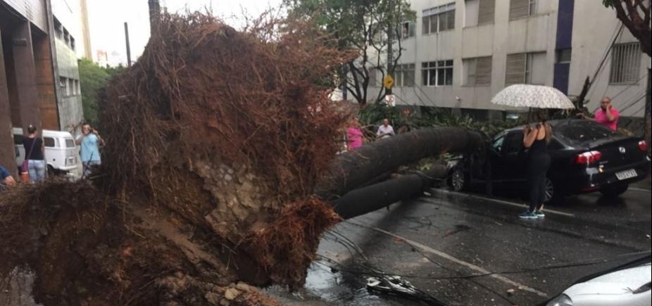 [Taxista morre após ter carro atingido por árvore em Belo Horizonte]