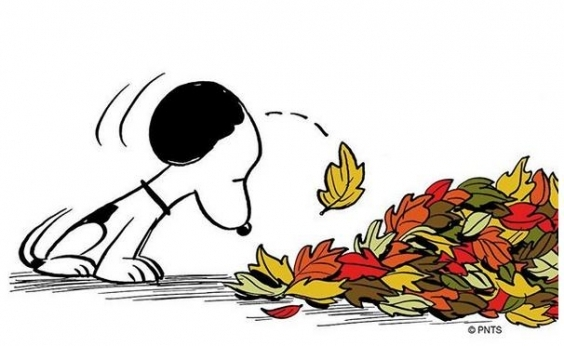 Casa do criador do Snoopy é destruída por incêndio florestal; relíquias do trabalho foram perdidas