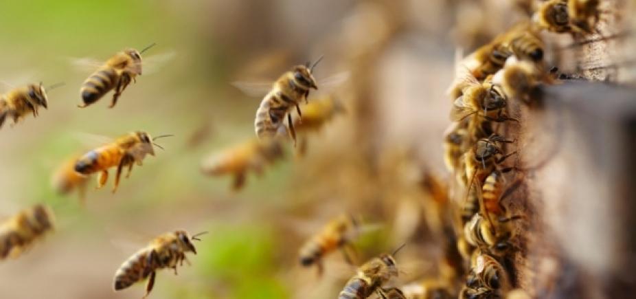 [Estudantes de colégio estadual em Salvador são atacados por abelhas]