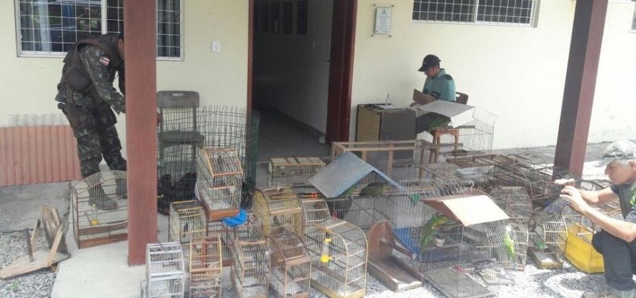 [Operação apreende mais de 40 pássaros silvestres e galos usados em rinhas em Porto Seguro]