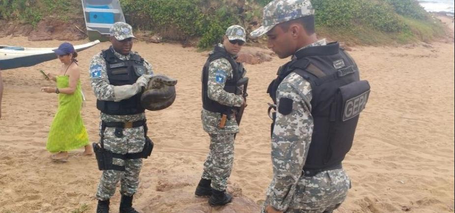 [Tatu, gavião e jiboias: Guarda Civil resgatou seis animais silvestres em Salvador nesta semana ]