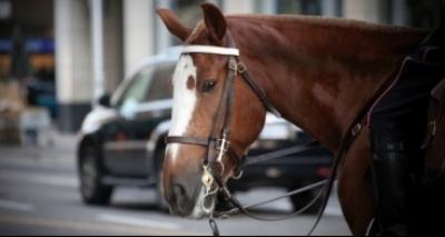 Cavalo vai parar na delegacia após dar coice em carro: