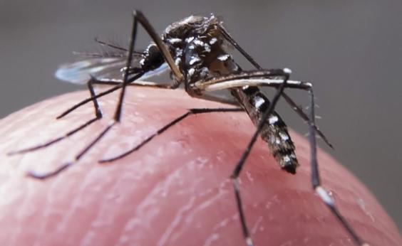 Casos de zika no Brasil diminuem 92% em 2017; dengue e chikungunya também têm queda