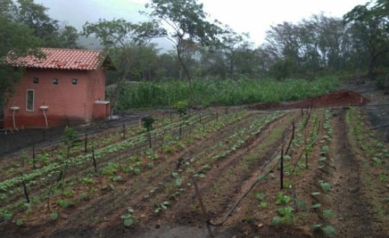 Curso na Chapada dá aulas de planejamento, implantação e manejo de sistemas agroflorestais