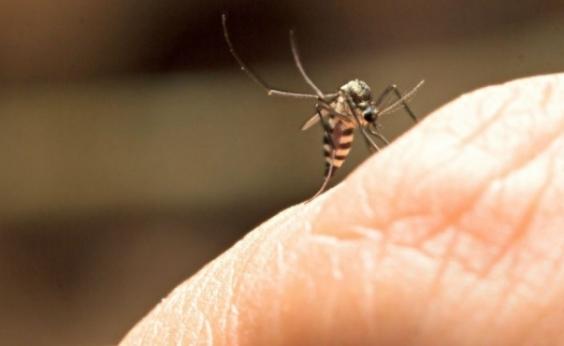 Minas registra mais duas mortes por febre amarela