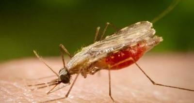 Cidade baiana tem surto de malária com uma morte e sete casos confirmados