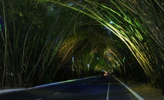 Por causa de obras do metrô, parte do bambuzal do Aeroporto será retirada