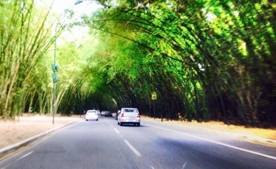 Sedur multa CCR por erradicação do bambuzal do aeroporto