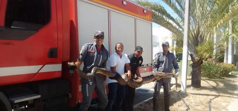 [Arembepe: sucuri de 4 metros é resgatada após incêndio em vegetação]