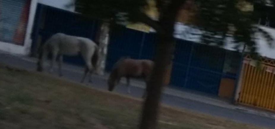 [Fazendinha: cavalos aproveitam a liberdade no bairro de Itapuã]