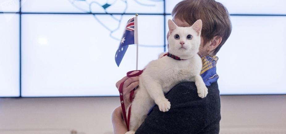 [Gato do museu Hermitage é novo oráculo da Copa]