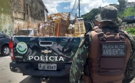 Polícia prende 11 pessoas em comércio ilegal de animais na Baixa do Fiscal