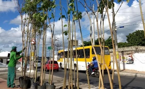 Avenida Suburbana receberá plantio de 1,4 mil mudas de árvores