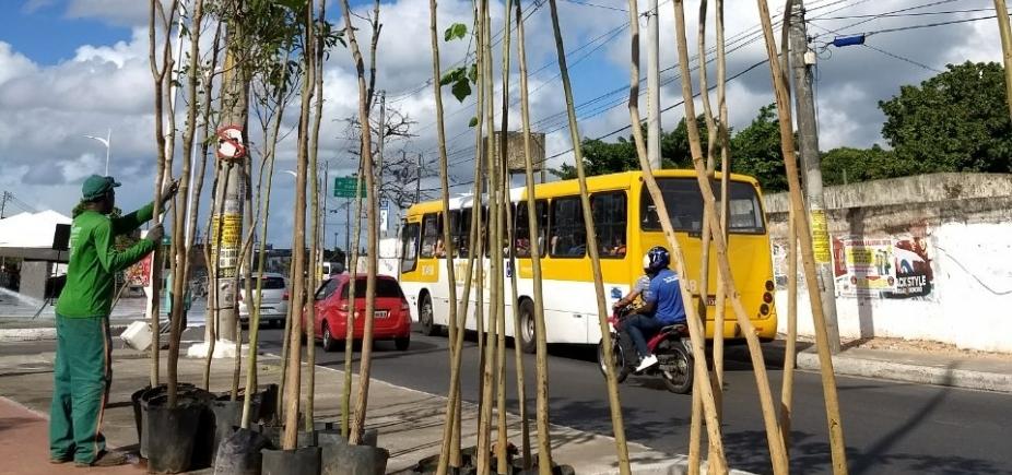 [Avenida Suburbana receberá plantio de 1,4 mil mudas de árvores ]