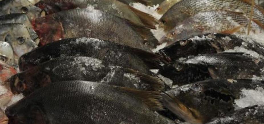 [Peixes vão ser vendidos com até 40% de desconto na Ribeira]
