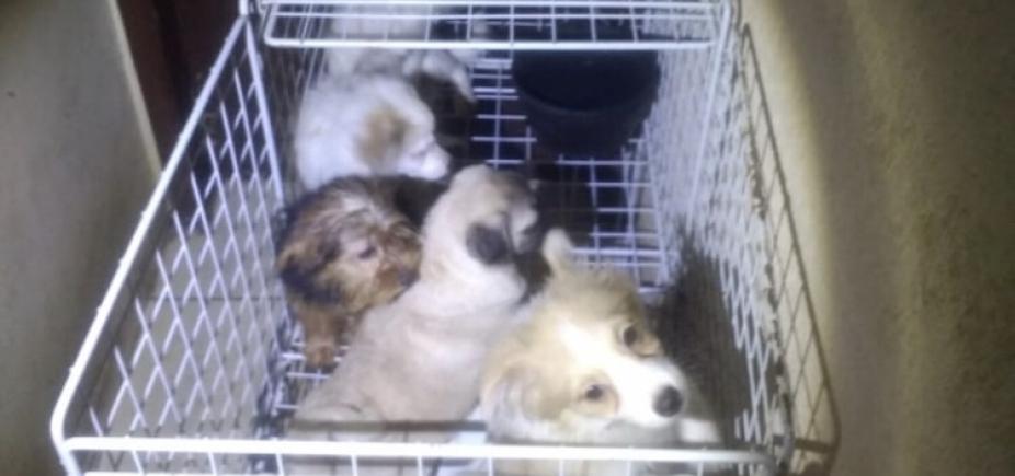 [PM e ativista resgatam 113 cães em canil irregular em SP ]