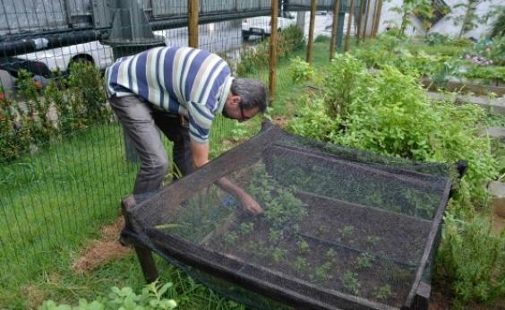 Imbuí vai receber horta comunitária nos próximos dias