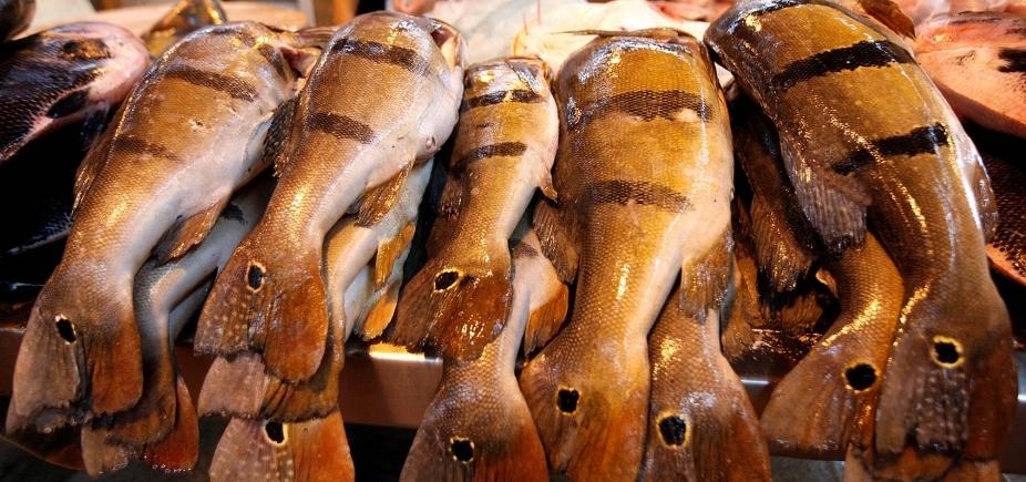 [Exportação de pescado baiano tem queda de 79% no primeiro trimestre ]