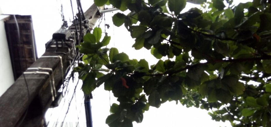 [Morador cobra poda de árvore na Cidade Nova: 'Galhos na rede elétrica' ]