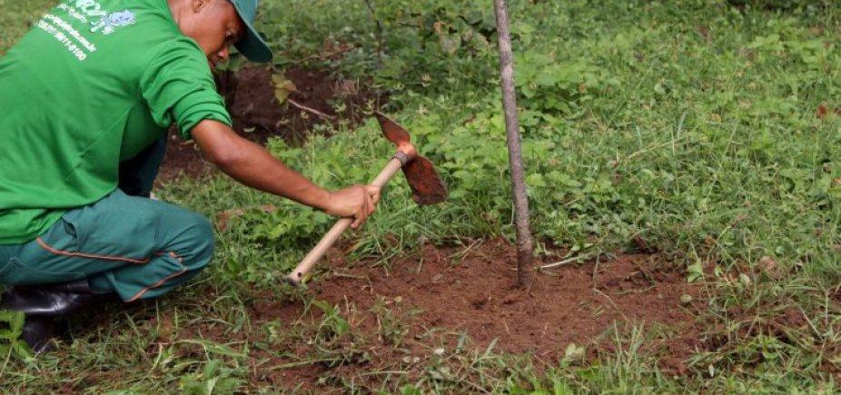 [Prefeitura promete plantar sete mil árvores em Salvador até julho ]