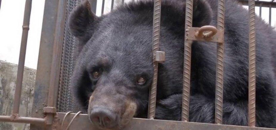 [Família chinesa cria filhote de urso achando que era um cachorro]