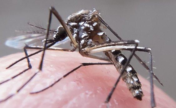 [Bahia tem 320 cidades em situação de alerta ou risco para dengue, zika e chikungunya]