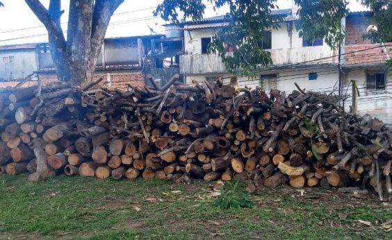 [Vinte e sete fogueiras com madeira irregular são apreendidas na BA-099]