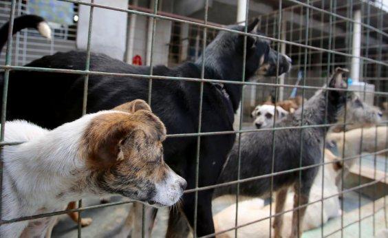 [Ação de adoção de animais é realizada no Shopping da Bahia]