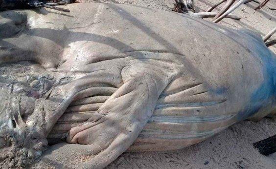 [Mais uma baleia jubarte é achada morta em Prado]