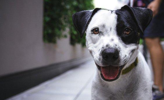 [ Prefeito assina projeto de lei que cria entidades em defesa dos animais em Salvador]