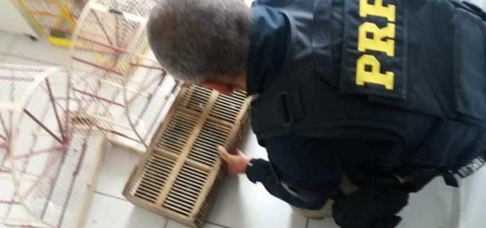 [PRF encontra 200 animais silvestres em caixas dentro de veículo no sul da Bahia]