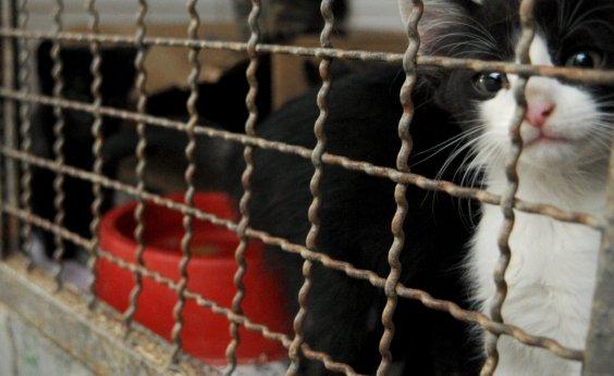 [Feira de Adoção de animais será realizada no fim de semana em Salvador]