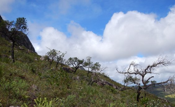 [Área de preservação do cerrado no oeste baiano é a maior do estado]