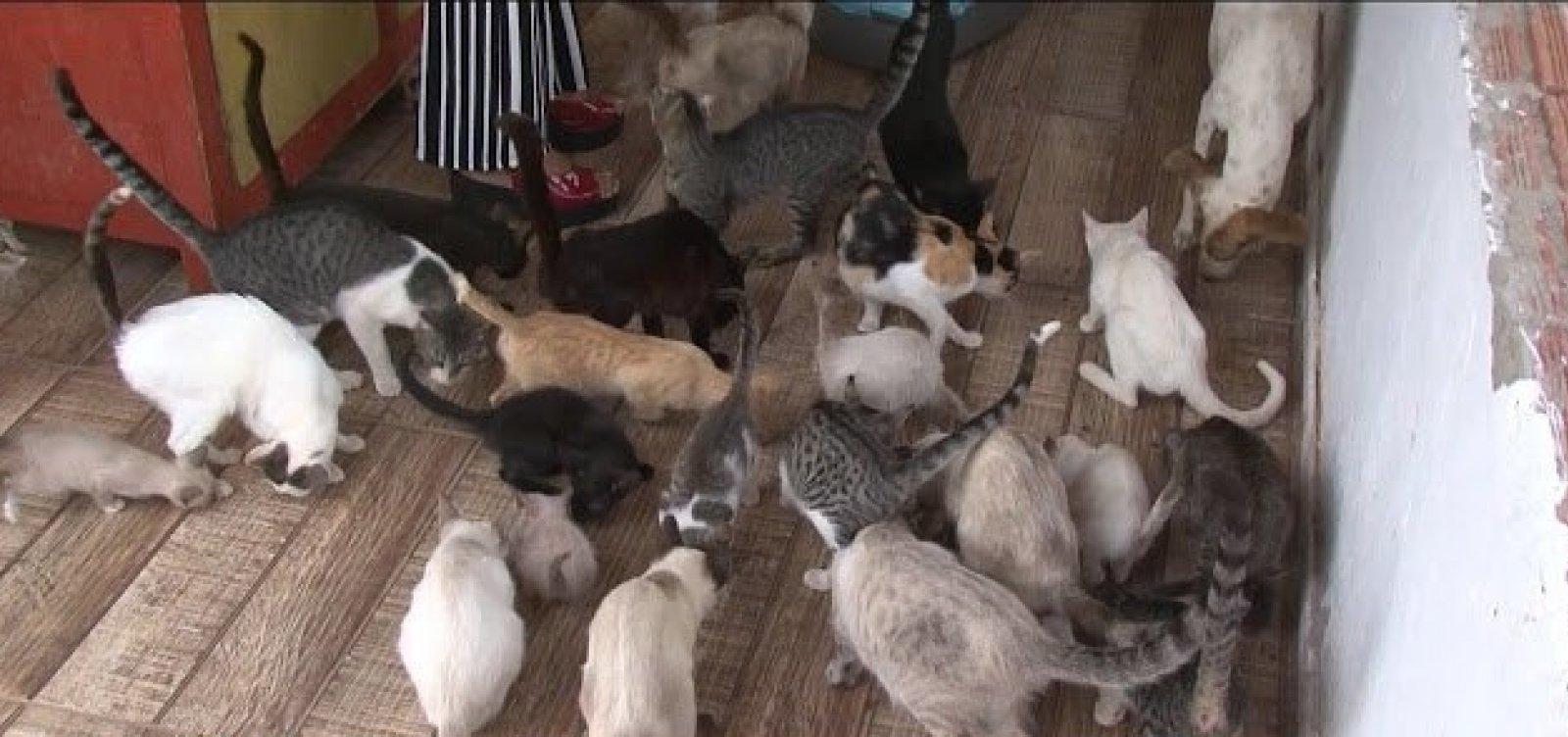 [Polícia investiga morte de 20 cães e gatos em Curaçá]