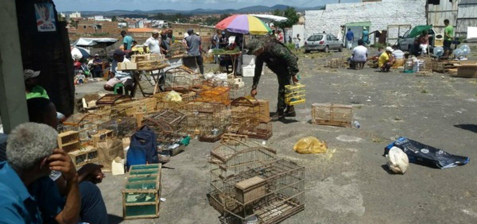 [Mais de mil animais silvestres foram apreendidos na Bahia, em 2018]