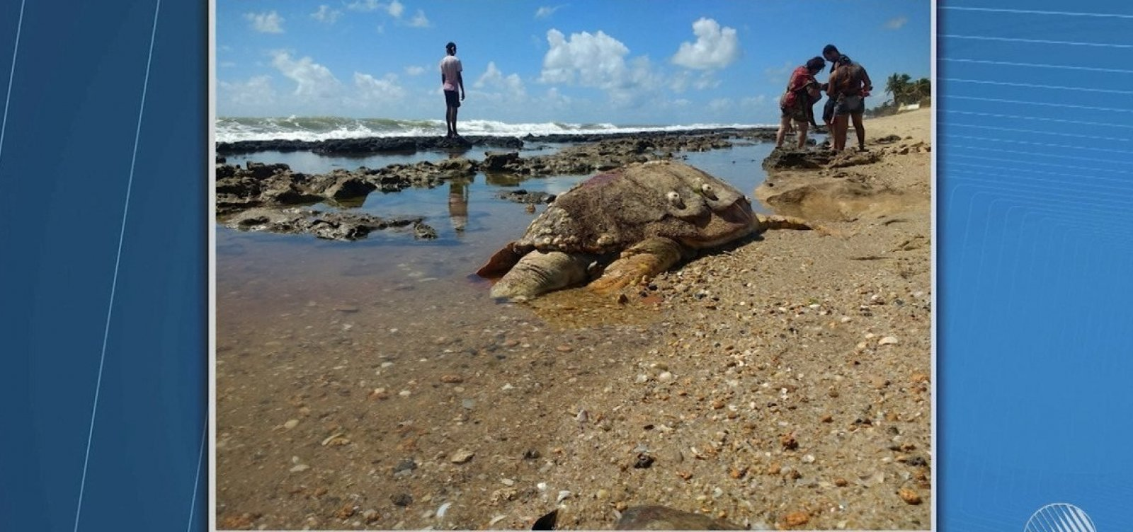 [Mais de 100 tartarugas são encontradas mortas na Bahia este ano]
