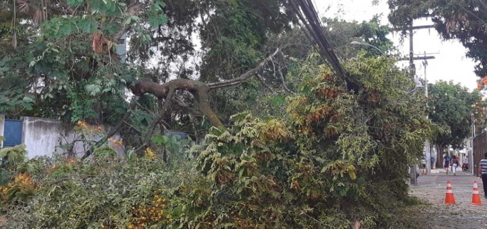 [Parte de árvore cai e interdita rua em Ondina]