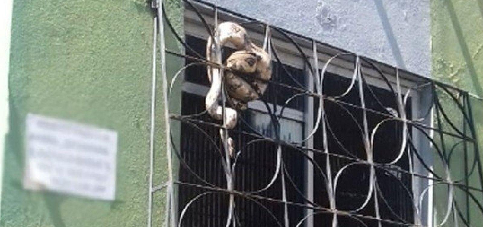 [Jiboia de quase dois metros é encontrada em janela de apartamento]