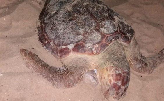 [Tartaruga é encontrada morta na praia de Boa Viagem, em Salvador]