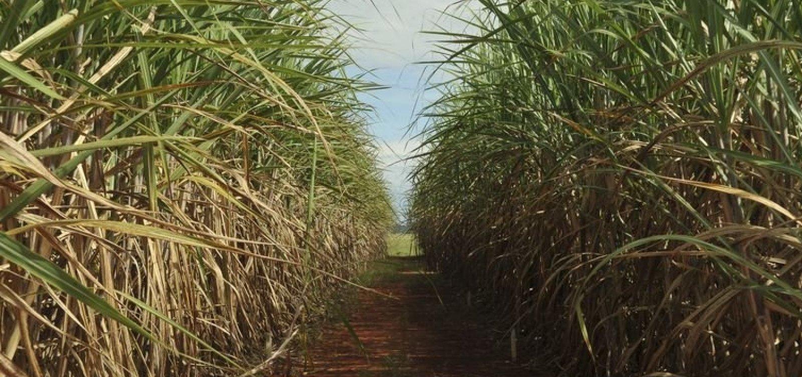 [Brasil inicia disputa contra China na OMC por restrição à importação de açúcar]